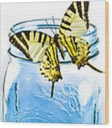 Butterfly On A Blue Jar Wood Print by Bob Orsillo