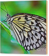 Butterfly On A Leaf Wood Print