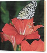 Butterfly On A Lily Wood Print