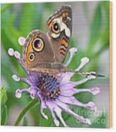 Butterfly On African Daisy Wood Print