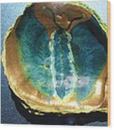 Butterfly On An Oyster Shell Wood Print