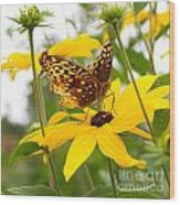 Butterfly On Blackeyed Susan Wood Print