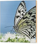 Butterfly On Blue Wood Print