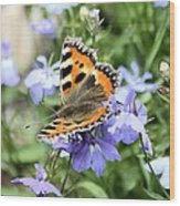 Butterfly On Blue Flower Wood Print