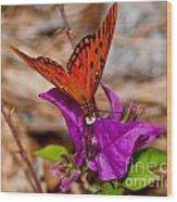 Butterfly On Bouganvilla Wood Print