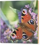 Butterfly On Buddleia Wood Print