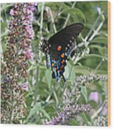 Butterfly On Bush Wood Print