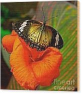 Butterfly On Canna Flower Wood Print