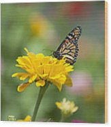 Butterfly On Carnation Wood Print