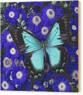Butterfly On Cineraria Wood Print