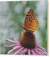 Butterfly On Cornflower Wood Print