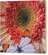 Butterfly On Daisy Wood Print