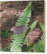 Butterfly On Fern Wood Print