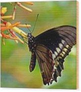 Butterfly On Firebush Wood Print