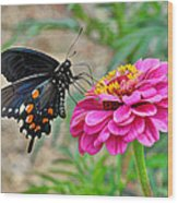 Butterfly On Flower Wood Print