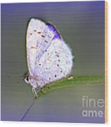 Butterfly On Grass Wood Print