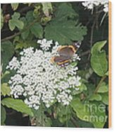 Butterfly On Lace Wood Print
