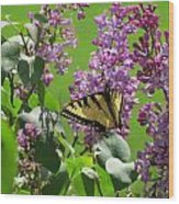 Butterfly On Lilac Wood Print by Diane Mitchell
