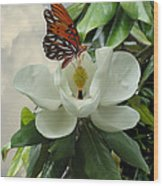 Butterfly On Magnolia Blossom Wood Print