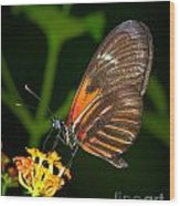 Butterfly On Orange Bloom Wood Print