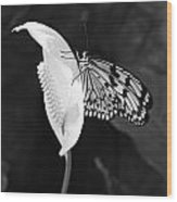 Butterfly On Peace Lilly Wood Print
