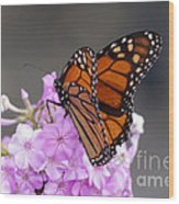 Butterfly On Phlox Wood Print