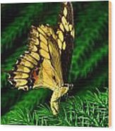 Butterfly On Pine Wood Print
