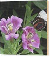 Butterfly On Pink Lillies Wood Print