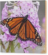 Butterfly On Pink Phlox Wood Print