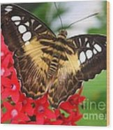 Butterfly On Red Flower Wood Print