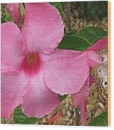 butterfly on the Mandevilla Wood Print