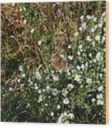 Butterfly On White Flowers Wood Print