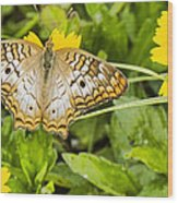 Butterfly On Yellow Flower Wood Print