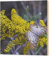 Butterfly On Yellow Wood Print