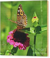 Butterfly On Zinnia Flower 2 Wood Print