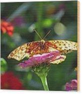 Fritillary Butterfly On Zinnia Wood Print