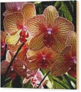 Butterfly Orchids Wood Print