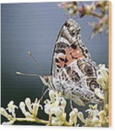 Butterfly - Painted Lady - Tasty Out Here Wood Print