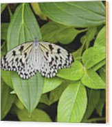 Butterfly Perching On Leaf In A Garden Wood Print