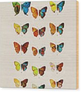 Butterfly Plate Wood Print