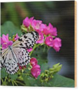 Butterfly Pollinating Flower Wood Print