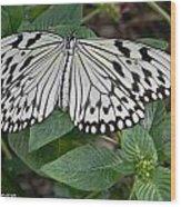Asian Paper Kite Wood Print