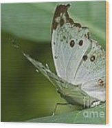 Butterfly Ready For Take Off Wood Print
