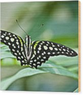 Butterfly Resting Color Wood Print