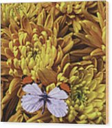 Butterfly Resting On Mums Wood Print