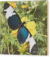 Butterfly Sara Longwing Wood Print