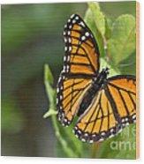 Butterfly Scene Wood Print