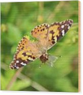 Butterfly Series 2 Of 5 Wood Print