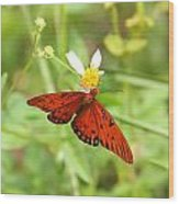 Butterfly Series 4 Of 5 Wood Print