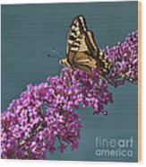 Butterfly Wood Print by Simona Ghidini